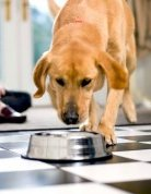 I psi mají radost z dobrého jídla