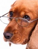 Vařená strava pro psí seniory – co by nemělo chybět v misce staršího psa?