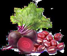 ŘEPA, mrkev, petržel kořen + nať, máta, sušené ovoce